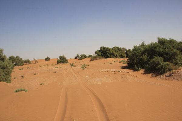 3. Etappe Piste Foum-Zguid  -  Mhamid