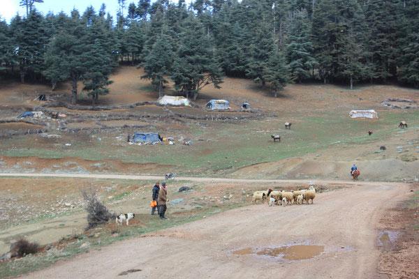 Hirtensiedlung ca.2000 m