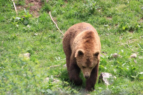 Bärenstation im Velebit