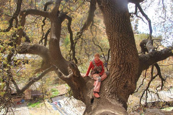 Stephanie im Baum, Quellfluss Oum er Rbia