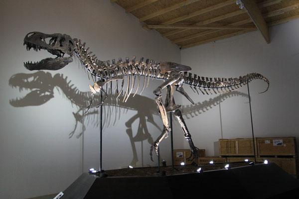 Jugendlicher T.Rex