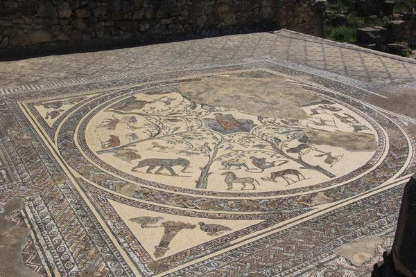 Mosaik römische Ausgrabungsstätte Volubilis