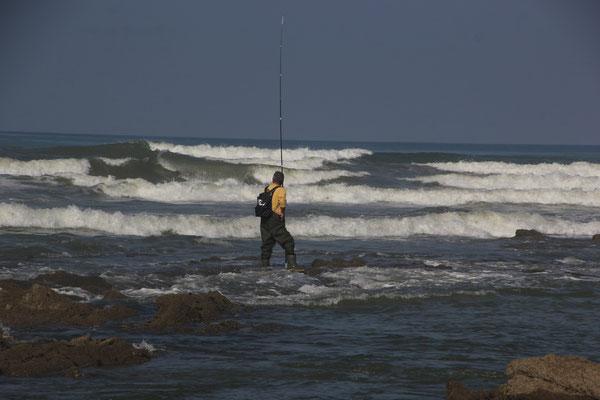 Angler, playa sauve terre, foret olonne