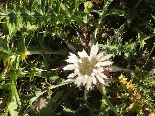 Blume im Altmühltal