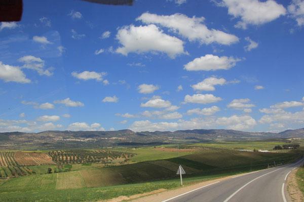 weiter Richtung Mulay Idriss, Volubilis