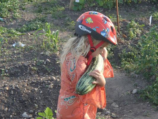 Sarah bei der Ernte