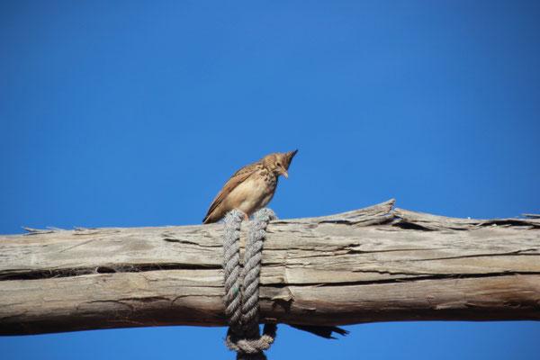 Vogel auf Schaukel, Ouzoud
