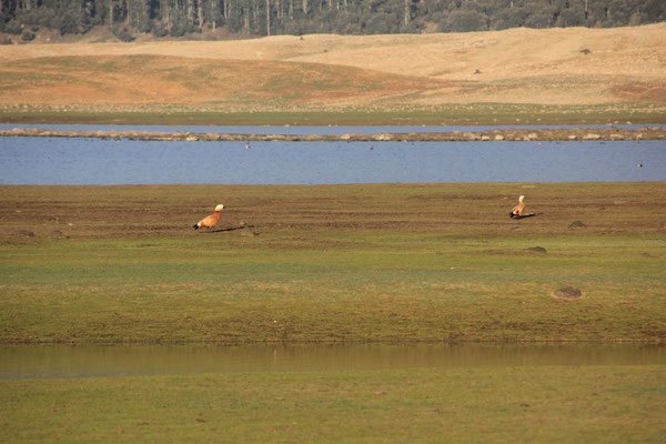 Vögel am Standplatz See Affmourine, NP Ifrane