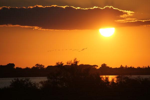 Sonnenuntergang Camargue