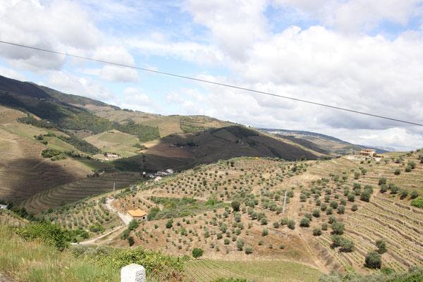 Fahrt durch die Weinberge oberhalb Pinohao,