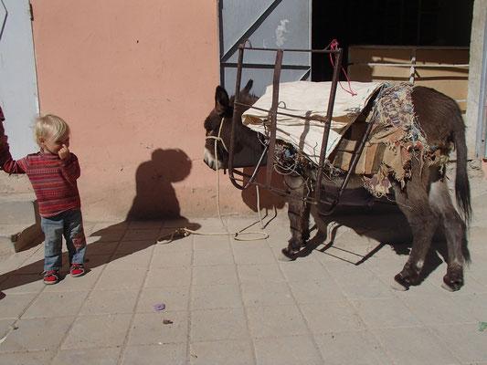 Sarah mit Esel im Gespräch Beni Tajite