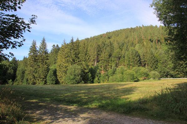Nordschwarzwald, Tannenwald
