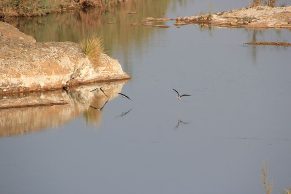 Vögel am Stpl.Nähe Tissint