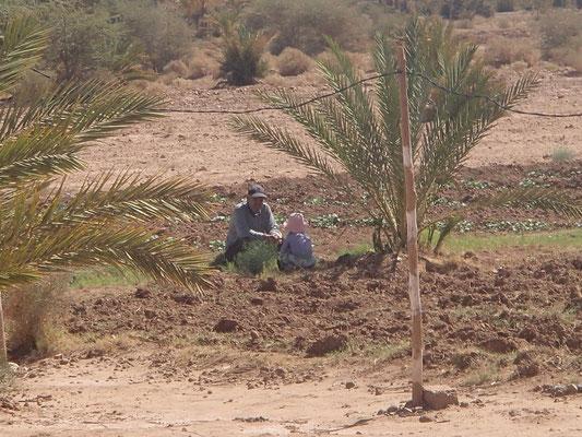 Berbersprache erlernen
