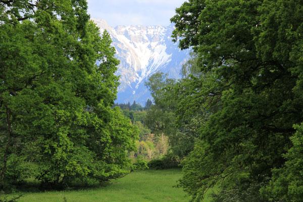 Eichenwald Hintergrund Estergebirge