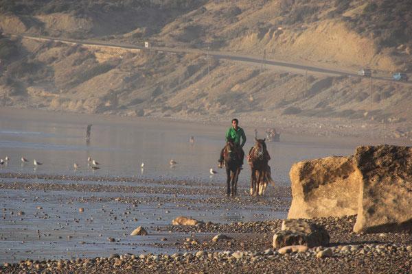Pferde auf dem Weg nach Hause, terre de ocean