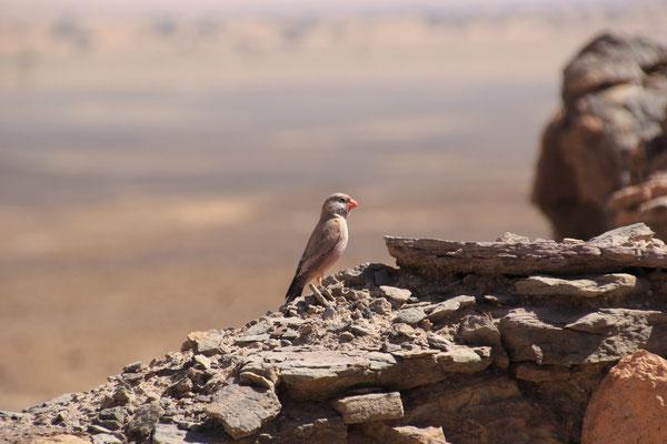 Vogel bei Haus am Tafelberg, Nähe Standplatz 3