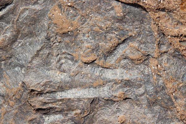 Versteinerungen im Gesteinsmeer