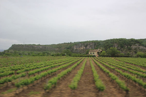 Weinanbau in der Ardeche