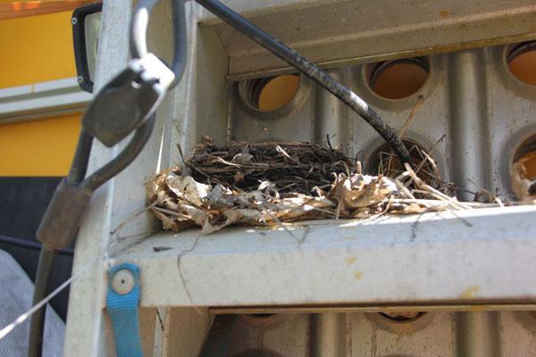 Vogelnest am Unimog