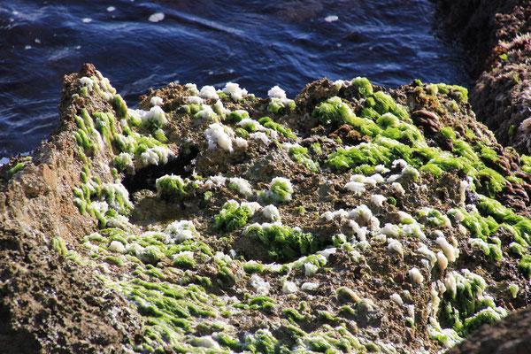 Salz mit Algen
