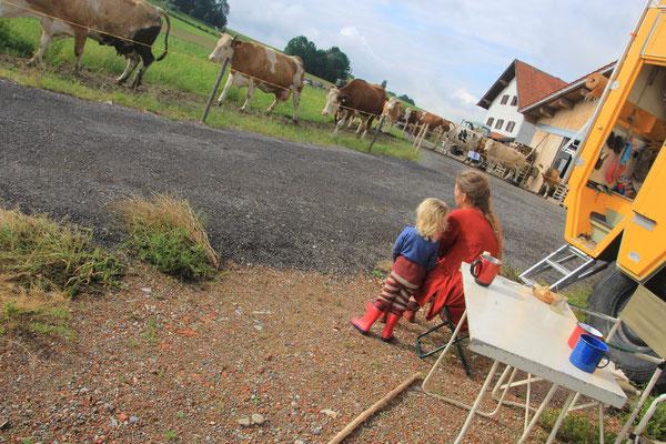 Kühe auf dem Weg zur Weide