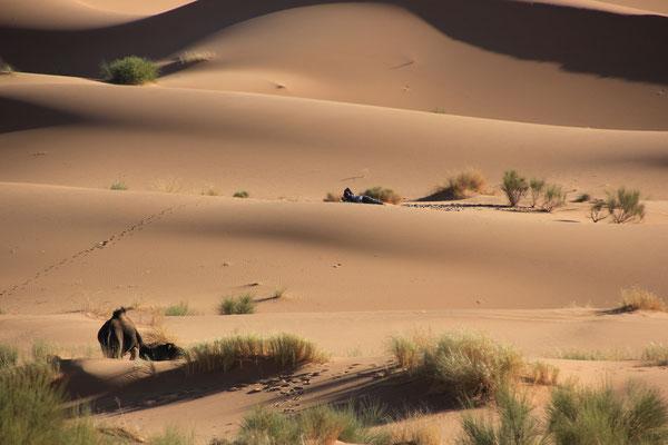Kamel mit Hirte am Standplatz 6, Erg Znuig