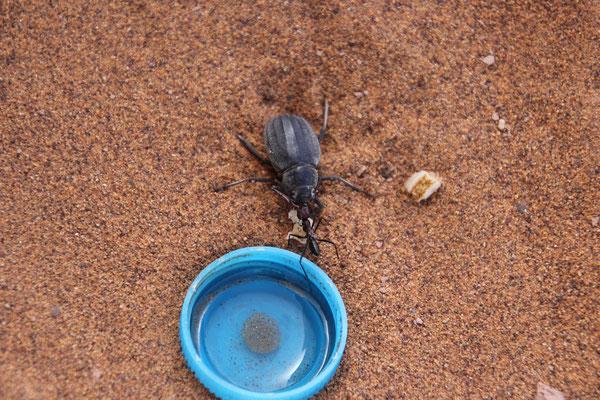 Käferfütterung