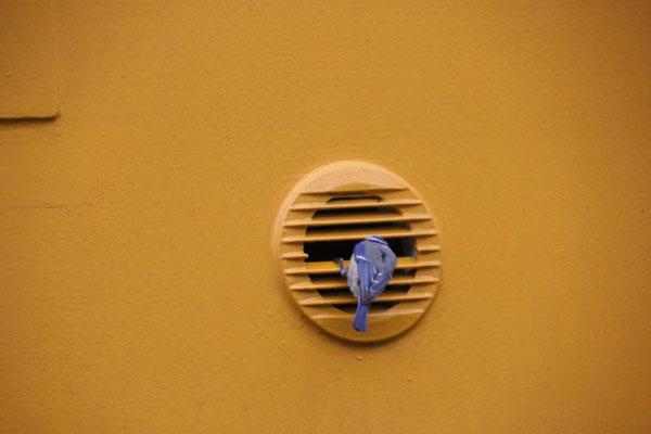 Blaumeisen-Unimog-Nest