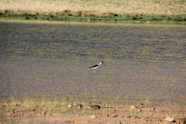 Wasservogel Standplatz See Nähe Izhir