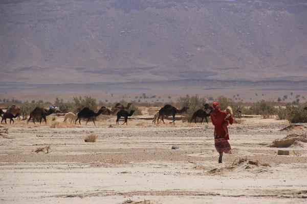 Kamelherde an der Piste