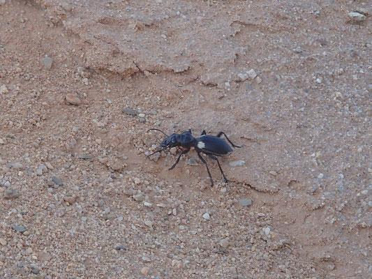 Käfer am Standplatz
