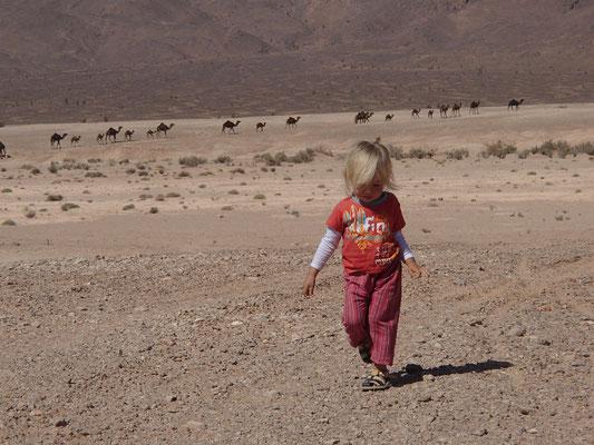 Sarah, Kamel am 1. Standplatz Foum-Zguid Runde