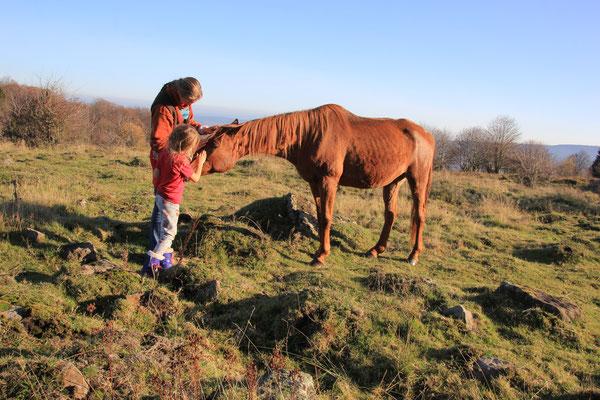 Begegnung mit den Pferden