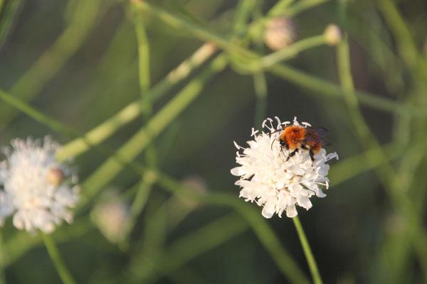 Insekt Los Mallos