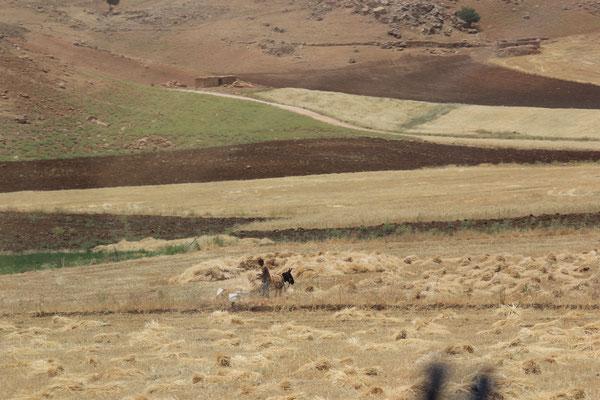 traditionelle Landwirtschaft mit Esel