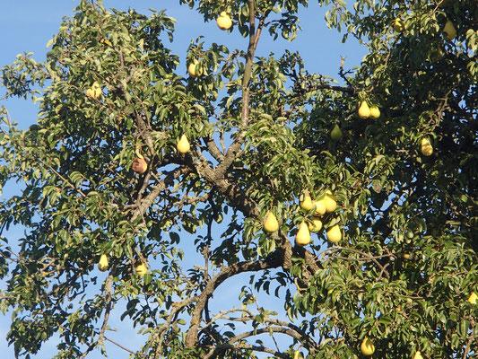 Herbstfrüchtebaum