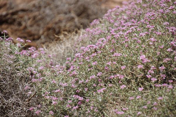 """""""Blumenwiese auf ca. 2900 m"""