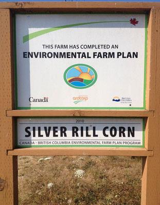 Silver Rill Corn