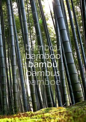 Bambù italiano e del mondo.