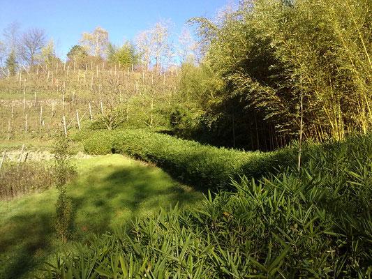 Autunno 2013 -  Sempreverdi...presso azienda agricola Essenza del Bambù, Piemonte.