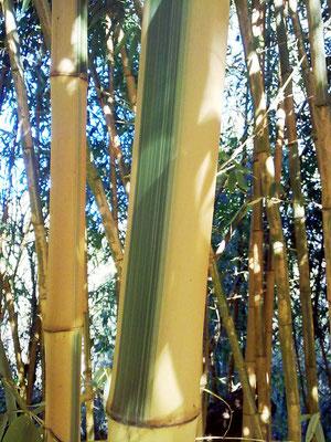 Autunno 2013 - Pennellate... Presso azienda agricola Essenza del Bambù, Piemonte.