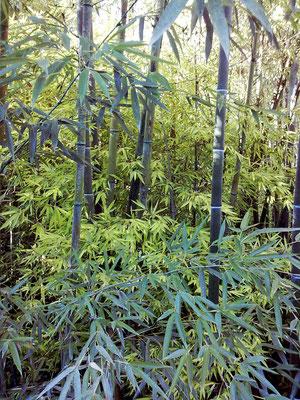 Autunno 2013 - Magnifica palette di verdi...presso azienda agricola Essenza del Bambù, Piemonte.