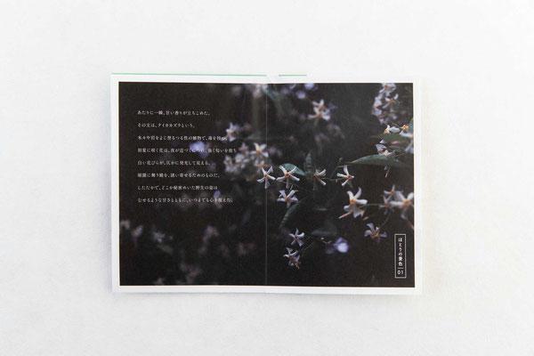 中面1/心にとまったシーンを、写真&文で綴るフォトエッセイ