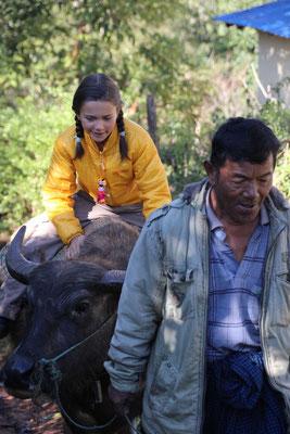 Weihnachtsüberraschung - Reiten auf einem Wasserbüffel, Myanmar