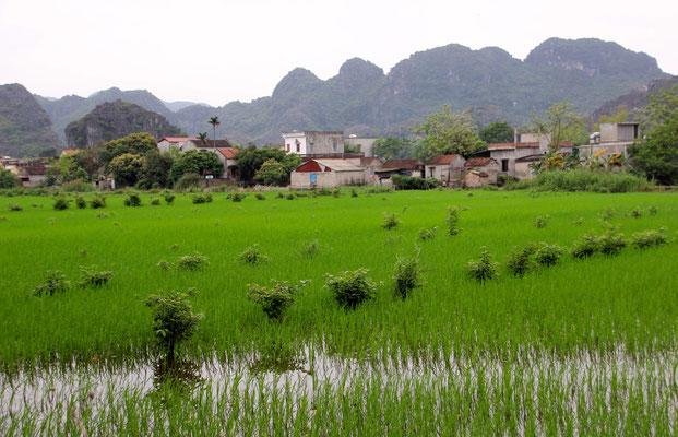 Karstgebiet in der trockenen Halongbucht bei Tam Co