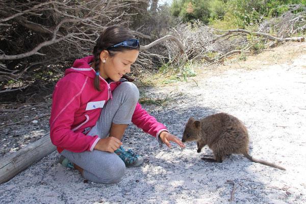 Tierkunde, Quokka auf Rottnest Island, Australien