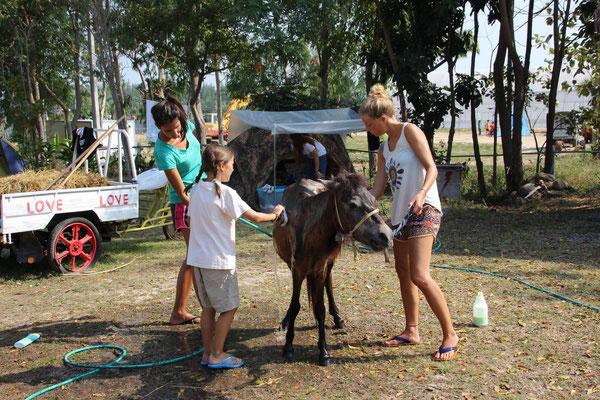 Tierpflege - Fohlen waschen, Thailand