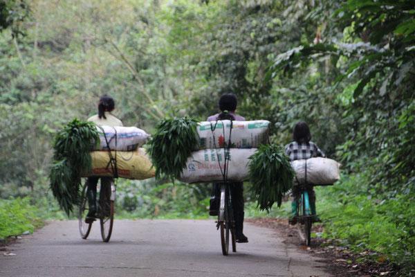 Heimfahrt von der Feldarbeit, Cuc Phuong NP