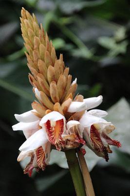Blütenpracht im Cuc Phuong Nationalpark